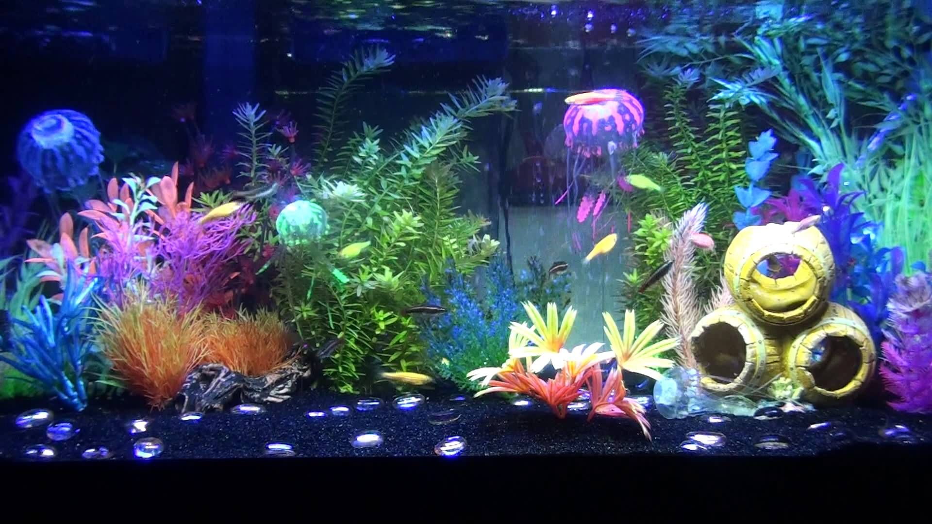 3 30 13 progress of glofish tank tanked pinterest for Neon aquarium