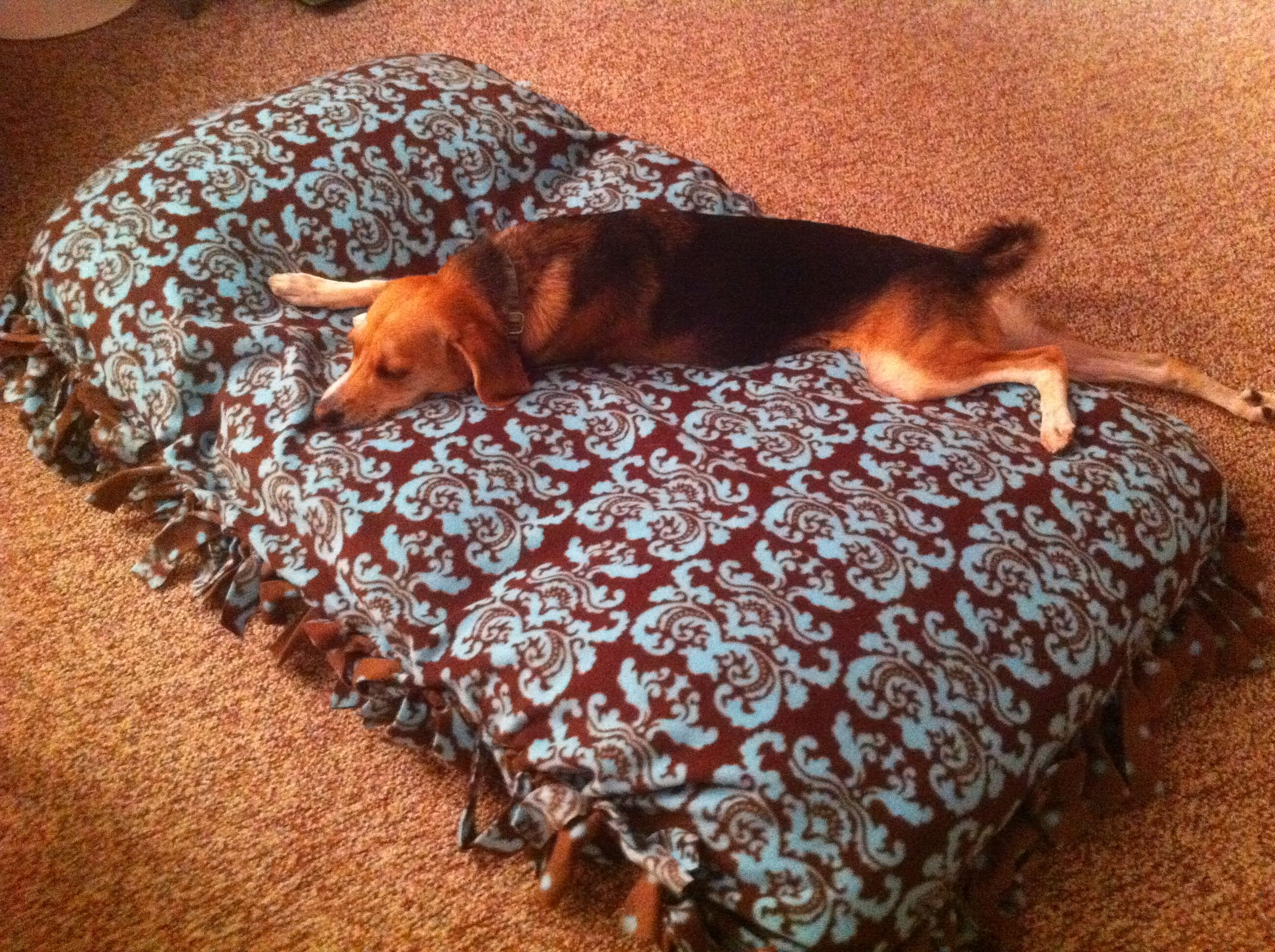 My Gia enjoying one of her no sew dog beds. Used a few old