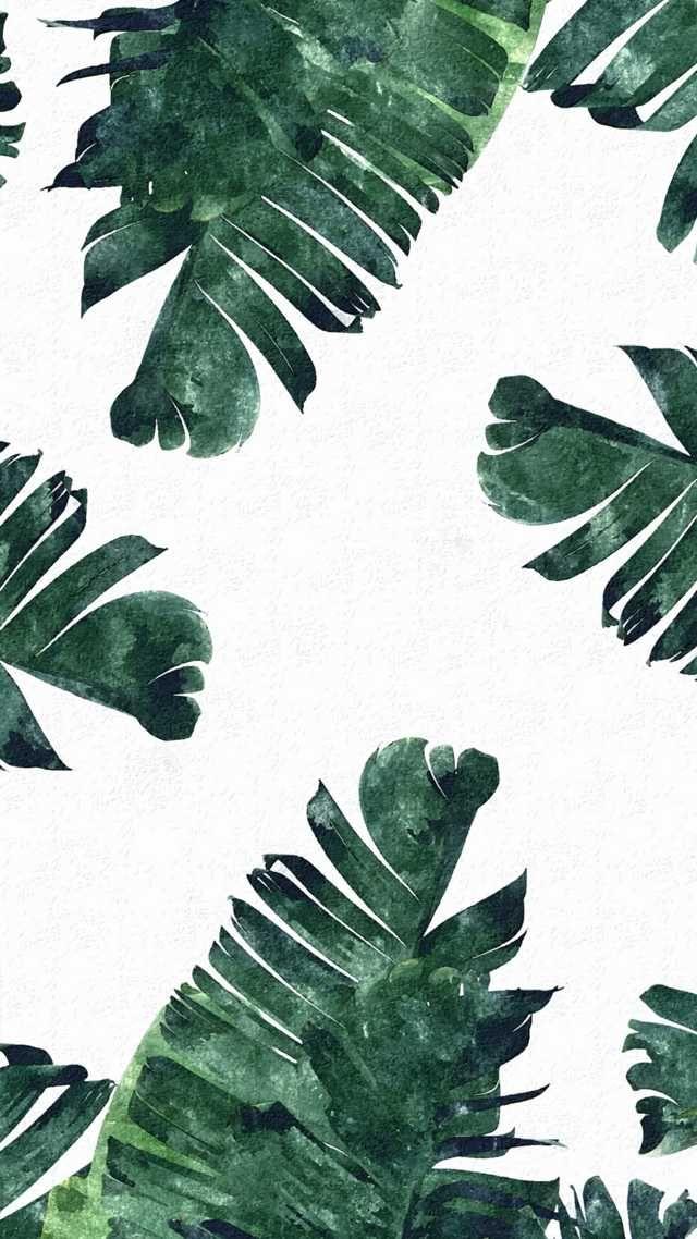 Imgur Post - Imgur в 2020 г. | Покраска обоев, Фотографии ...  Фруктовый Сад Обои