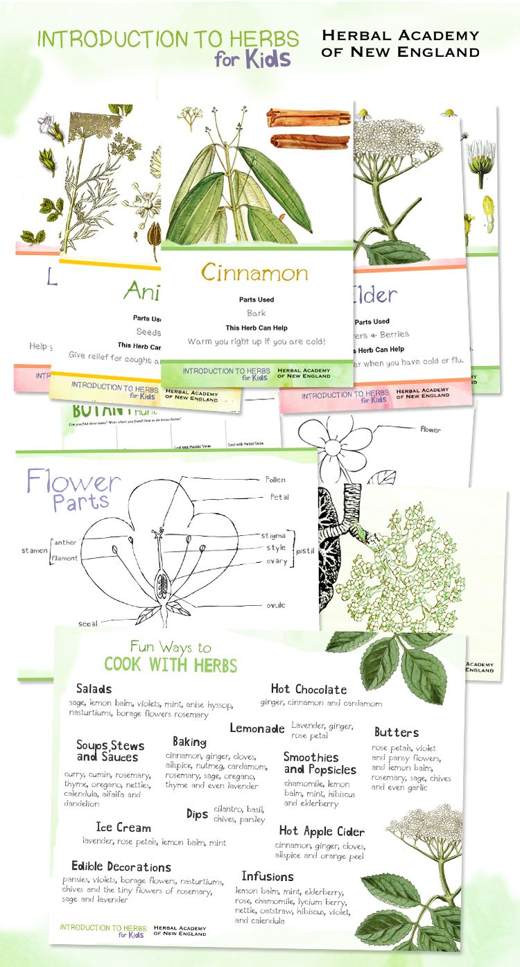 the free introduction to herbs for kids series diy activities
