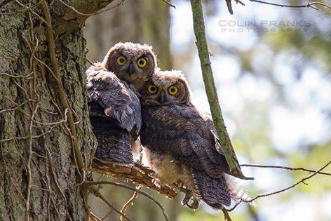 Owl Pages Com