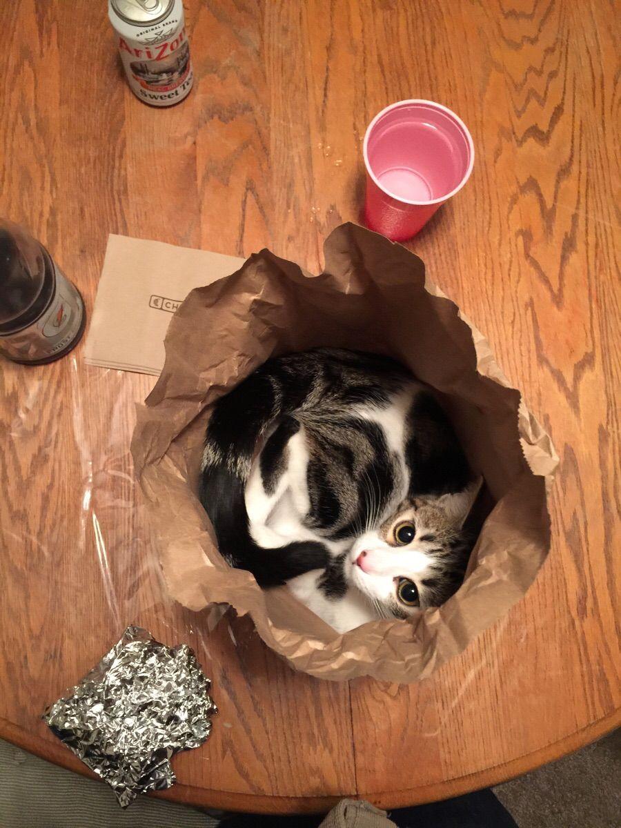 Kitty in a bag cute pinterest
