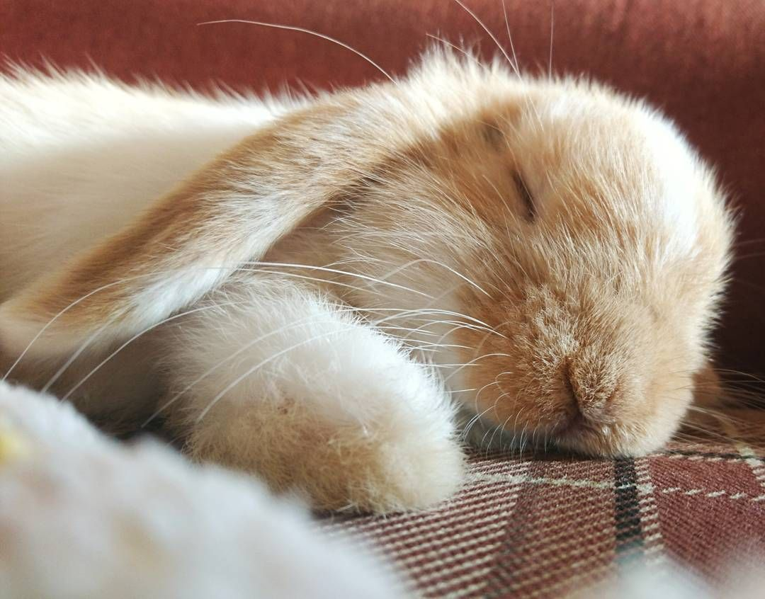 фотографии спящий заяц зайцы должен быть