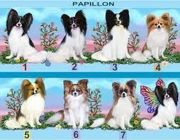 papillon dog art - Buscar con Google