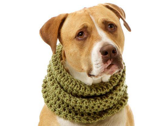 Knitted Pet Products Pawsh Magazine Studio Dog Sweaters Dog Scarfs Crochet Dog