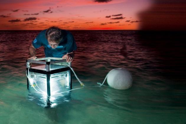 Forskningsprojekt avslöjar havets hemligheter