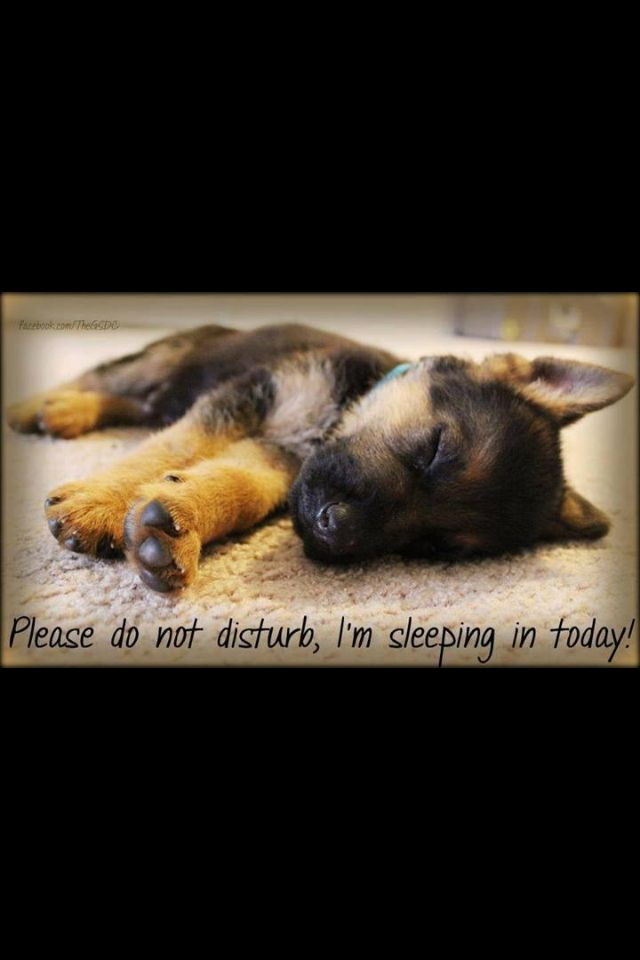 Shhhhh | German shepherd puppies, German shepherd breeds ...