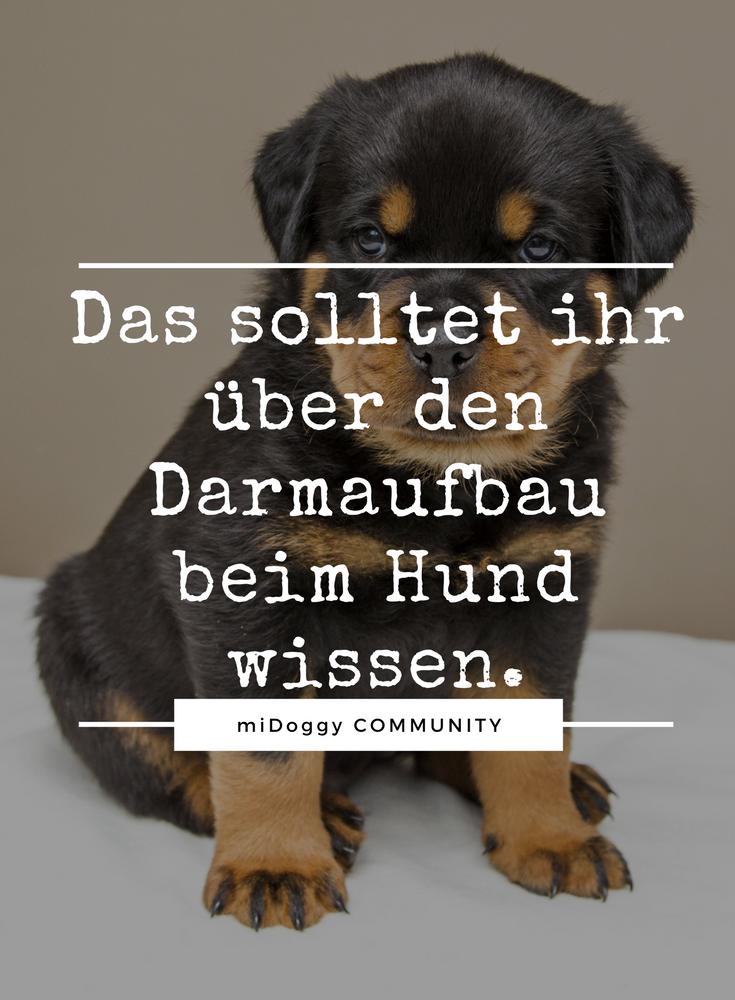 Darmaufbau Beim Hund Vor Allem Nach Tierheimaufenthalt Oder Antibiotikatherapie Hunde Gesunde Hunde Hunde Ernahrung