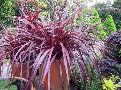 Your Easy Garden | Plant U0027em And Forget U0027em U2013 Monroviau0027s 5 Steps To