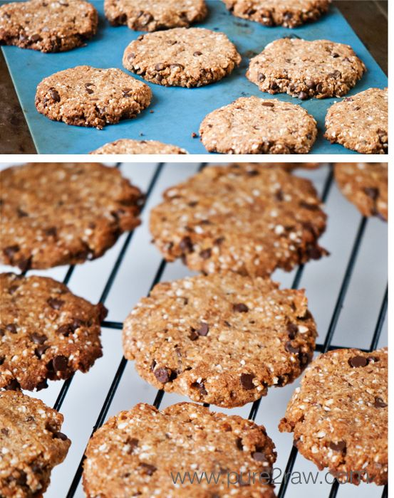 almond meal and coconut flour chocolate chip cookies (free of grains, gluten, wheat, soy, dairy, and low in sugar)