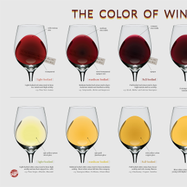 The Color Of Wine - Infographic design