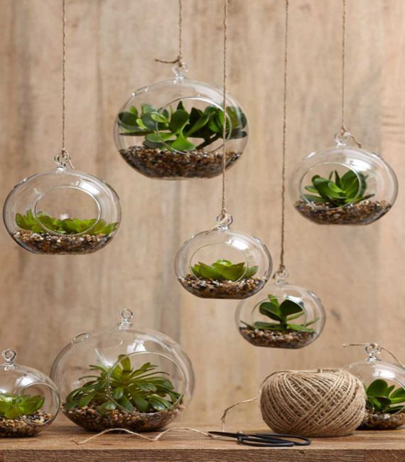 Plantas en cristal flores pinterest terrario - Plantas para terrarios ...