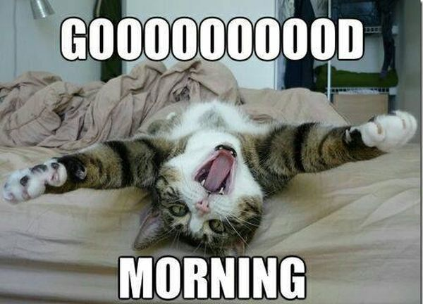 Good morning | Good morning meme, Funny good morning memes, Morning memes