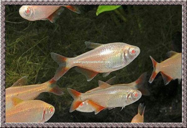 Pin On Fish I Ve Had