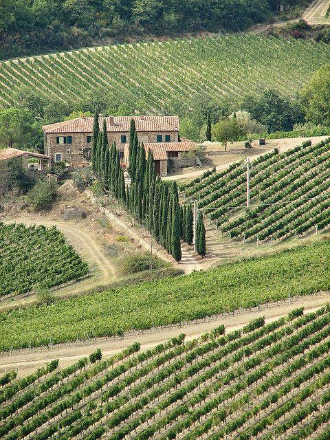 Vineyards In Chianti Toscana Italia Tuscany Italy