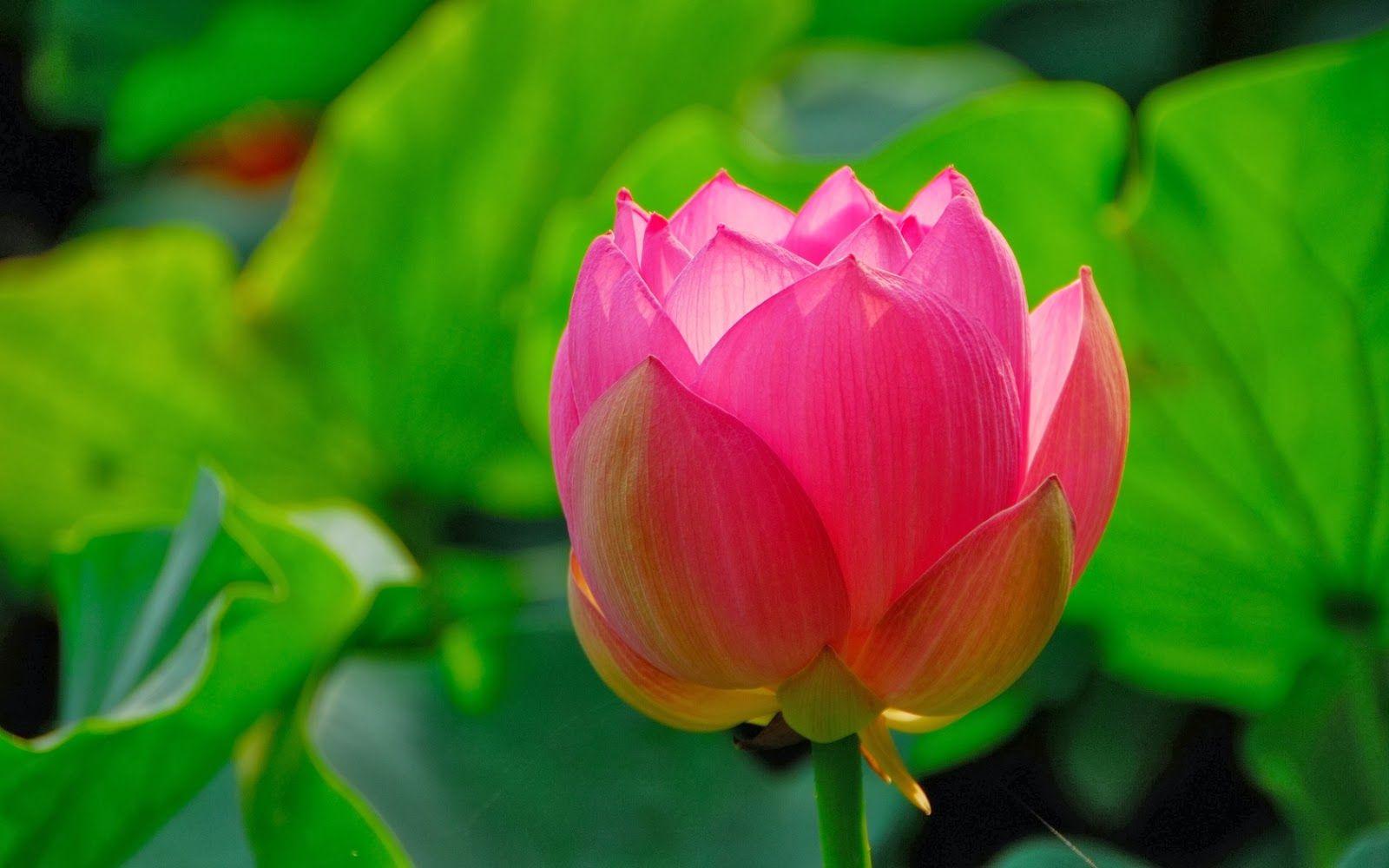 Fotos De Flores Bonitas Gratis Para Fondo De Pantalla En