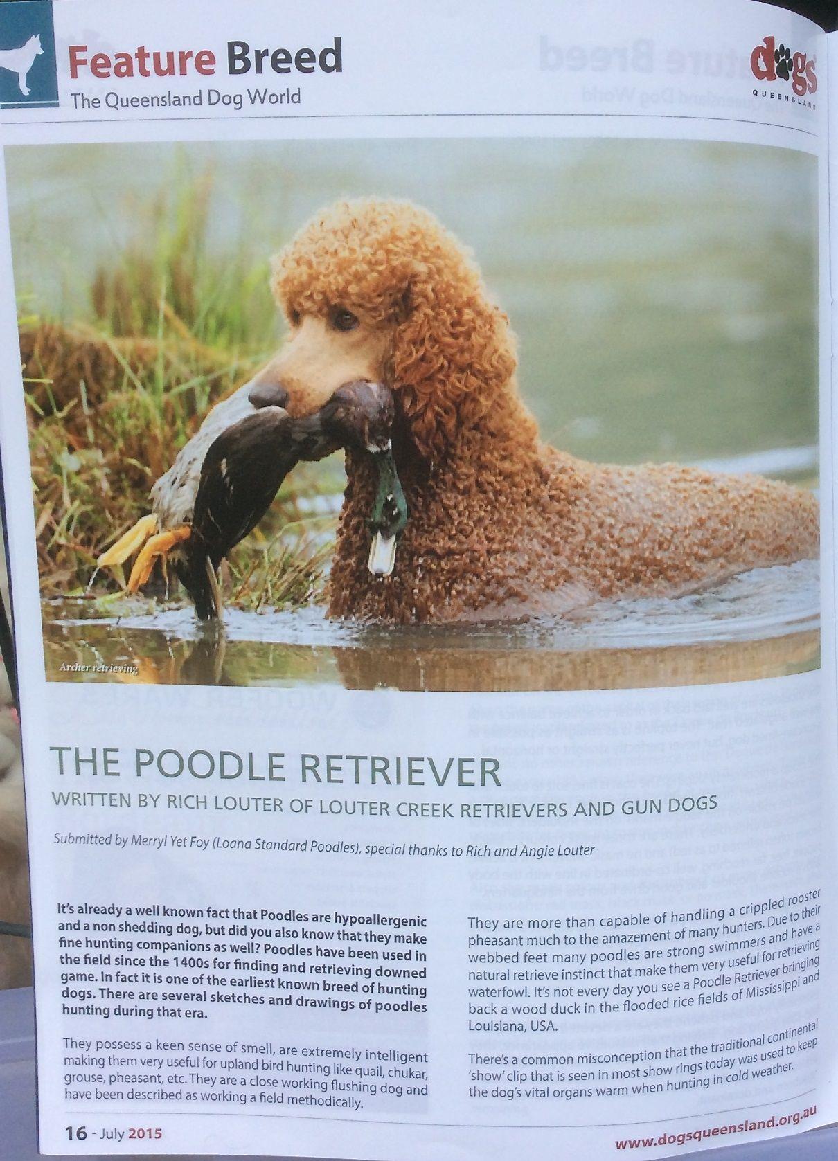 Dogs Queensland Magazine July 2015 Australia Poodle Poodle