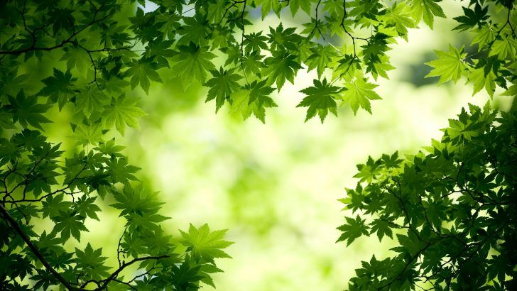 The 10 Nature Green Color Hd Good For Your Eyes Natural Wallpaper Android Desktop High Quality Resoluti Green Leaf Wallpaper Nature Wallpaper Scenery Wallpaper
