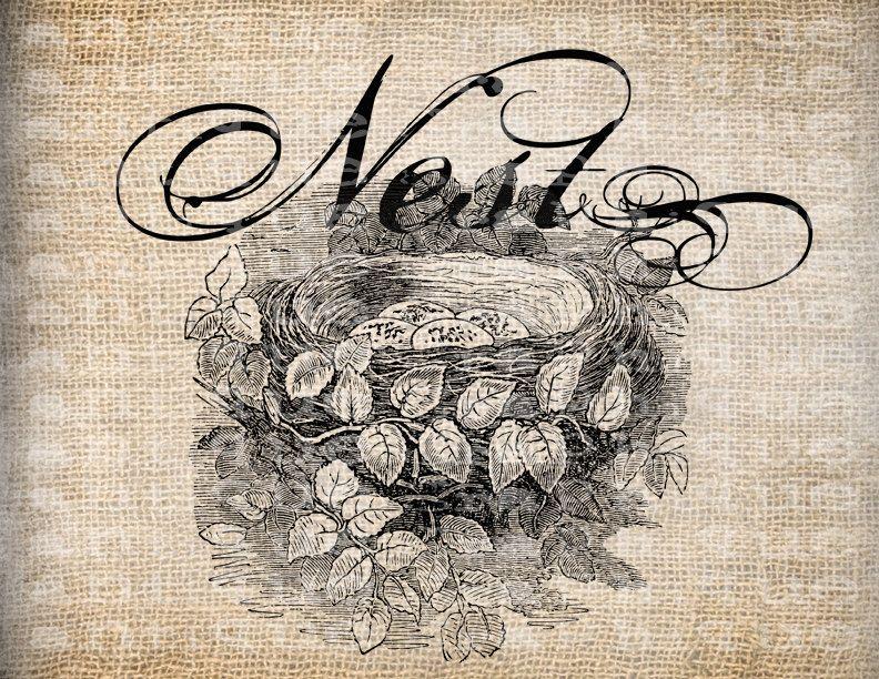 Antique Bird Nest Scroll Flourish Illustration Digital Download for Papercrafts, Transfer, Pillows, etc Burlap  No 3377. $1.00, via Etsy.