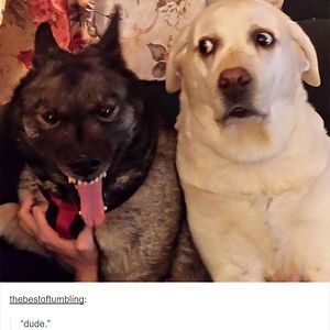 109 Dog Posts On Tumblr That Are Impossible To Get Through Without