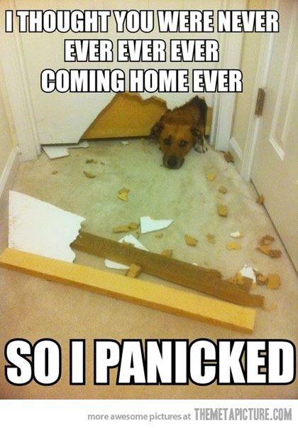 Separation Anxiety isn't funny - it's a serious behavioral disorder, that often results in injury to the dog (broken teeth & nails, and in extreme cases, dogs that jump through plate-glass windows can fracture bones or even die) &/or extensive property damage . Fortunately, anxiolytic medications & behavior modification training are usually effective.