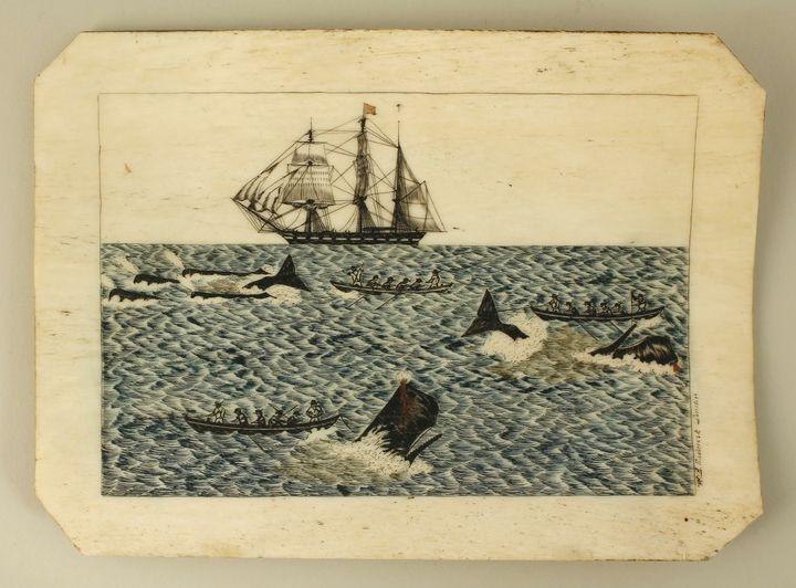 Panbone scrimshae. William Roderick 1840. Ships surgeon