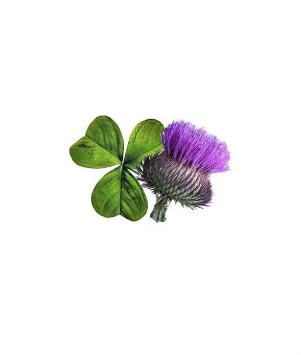 Celtic Knot Shamrock And Thistle Irish Shamrock And Thistle