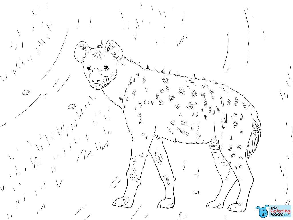 African Spotted Hyena Coloring Page Zoo Coloring Pages Lion