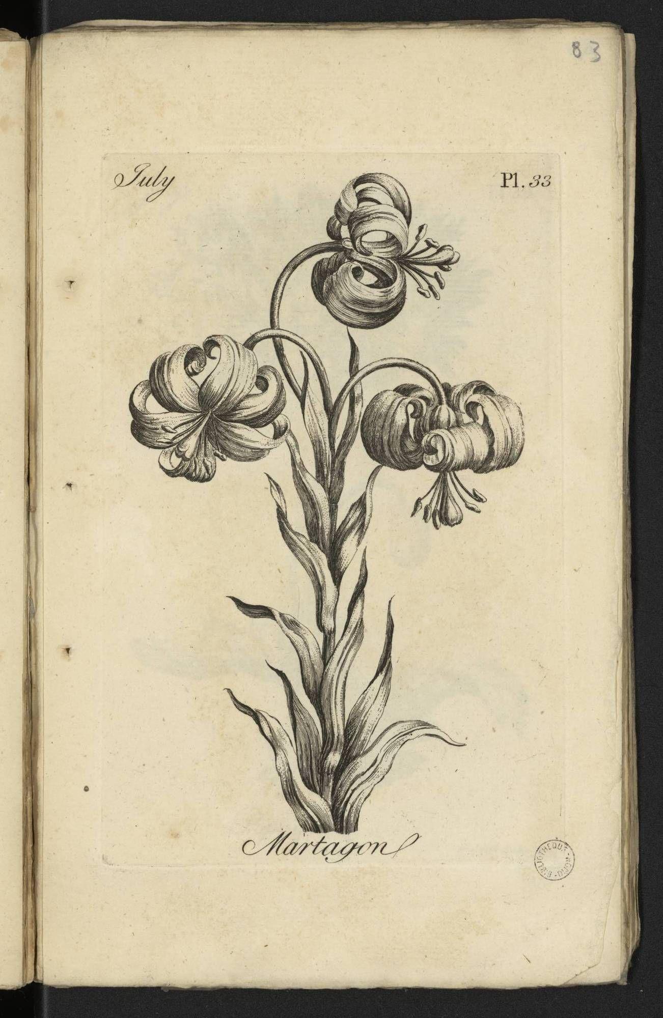 Fleur De Lotus Dijon bibliothèque municipale de dijon — est00434 | sketches