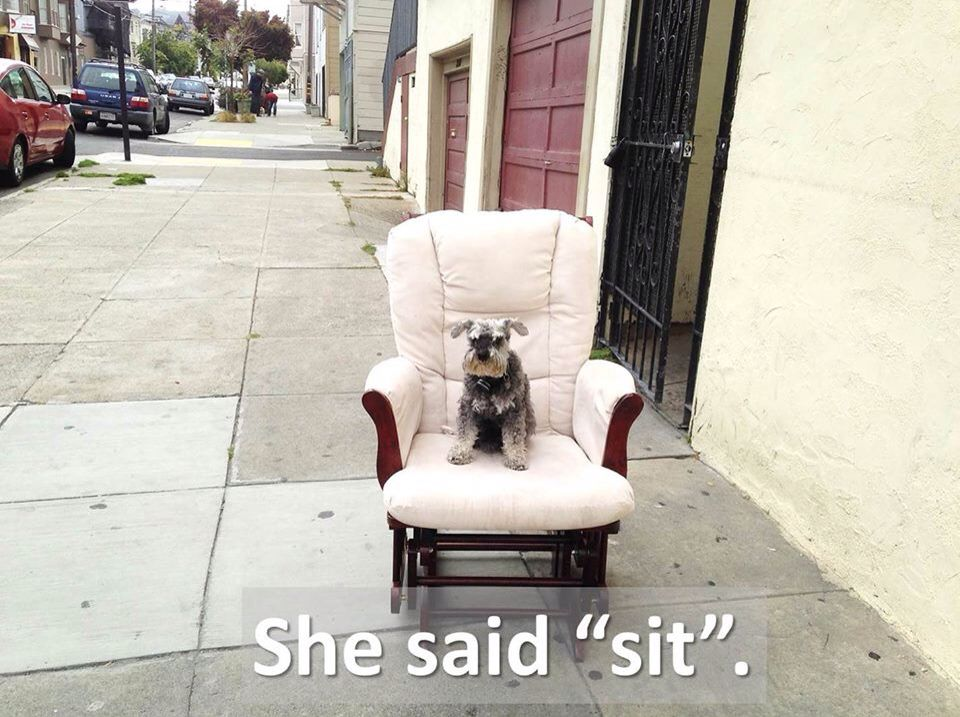 Now THAT'S a good dog!  Chillin' in the Mission...  Here's how to teach your dog or puppy to sit: https://youtu.be/1nePERlGvw0