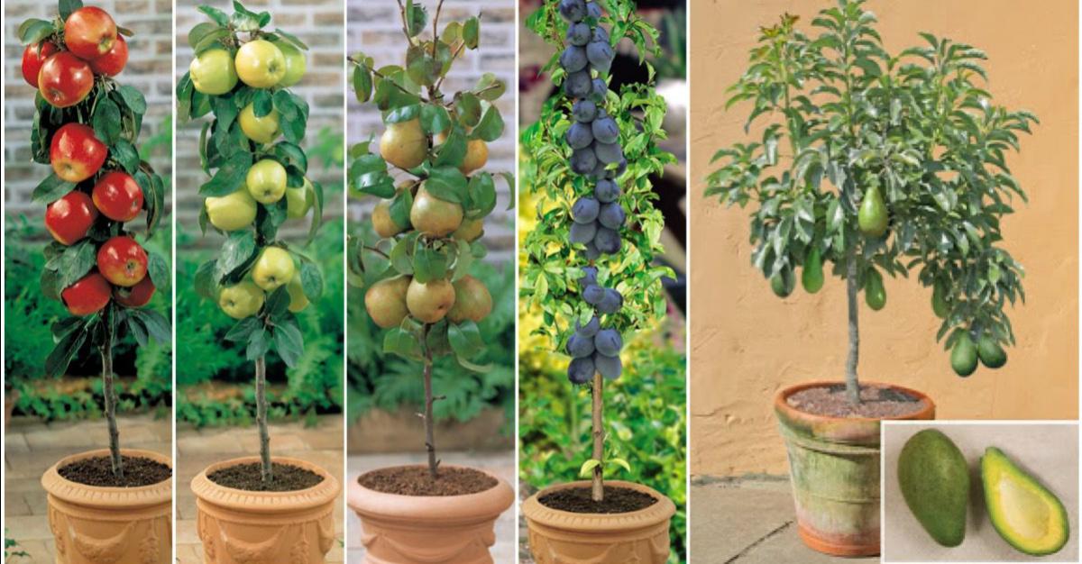 7 árboles frutales que puedes cultivar sin necesidad de tener un