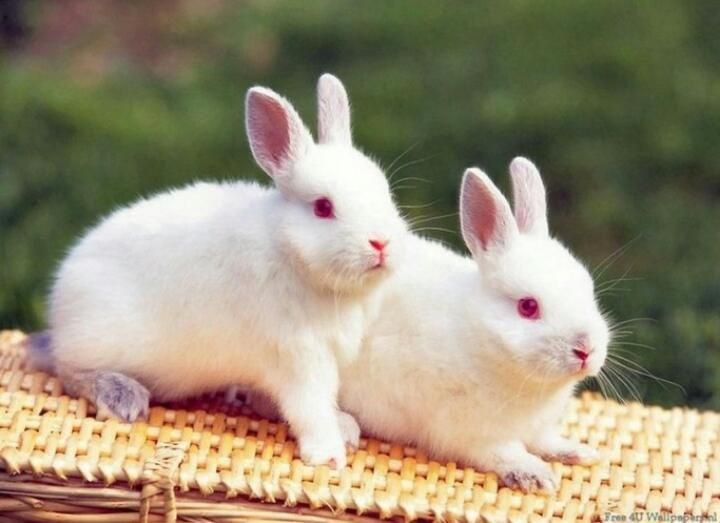 Fiona Pieria On Twitter Cute Animals Beautiful Rabbit Cute Baby Bunnies