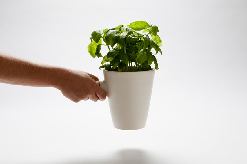 Kitchen Herb Pot - Nueve