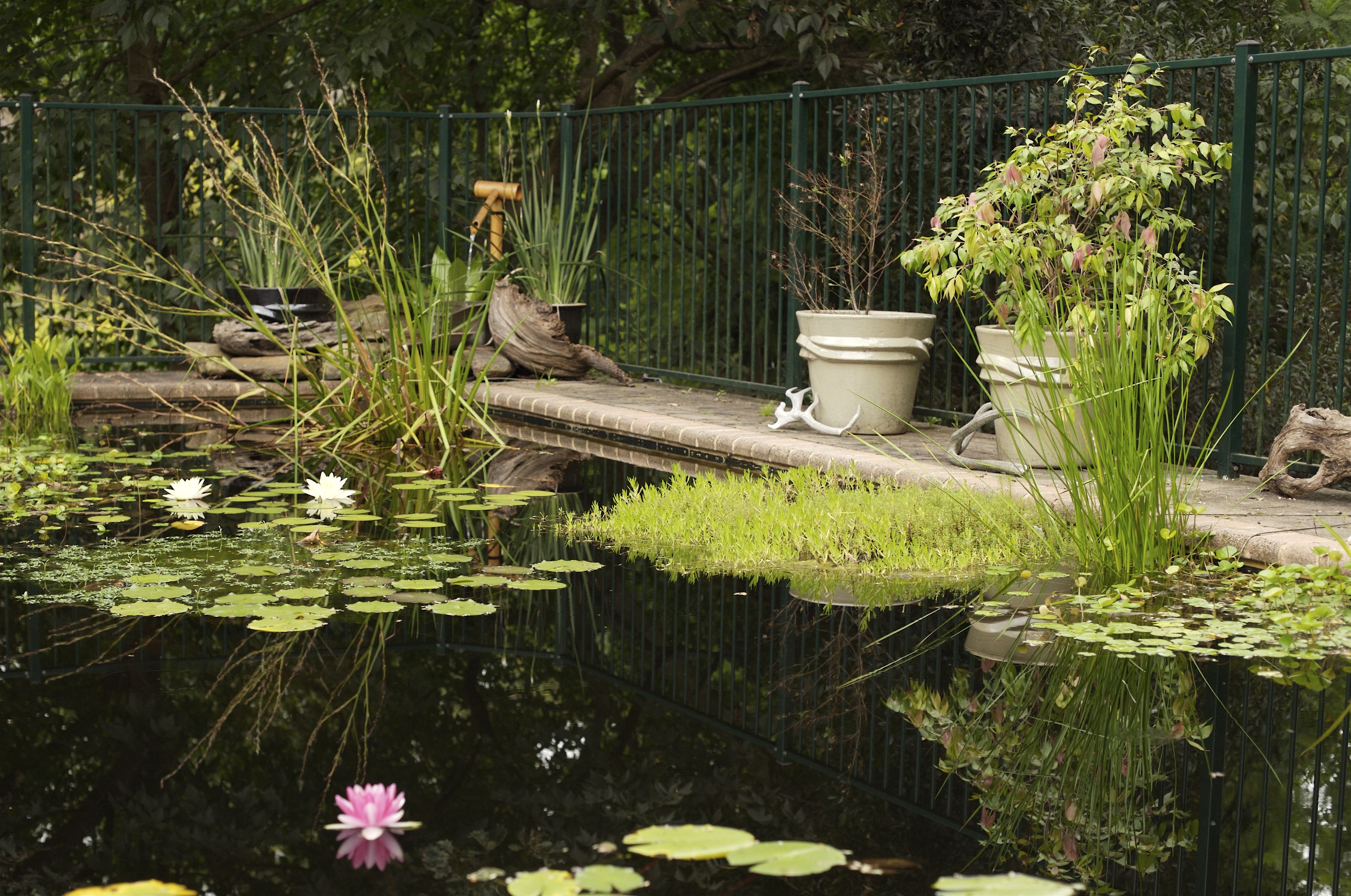 attractive pond pools Part - 9: attractive pond pools photo gallery