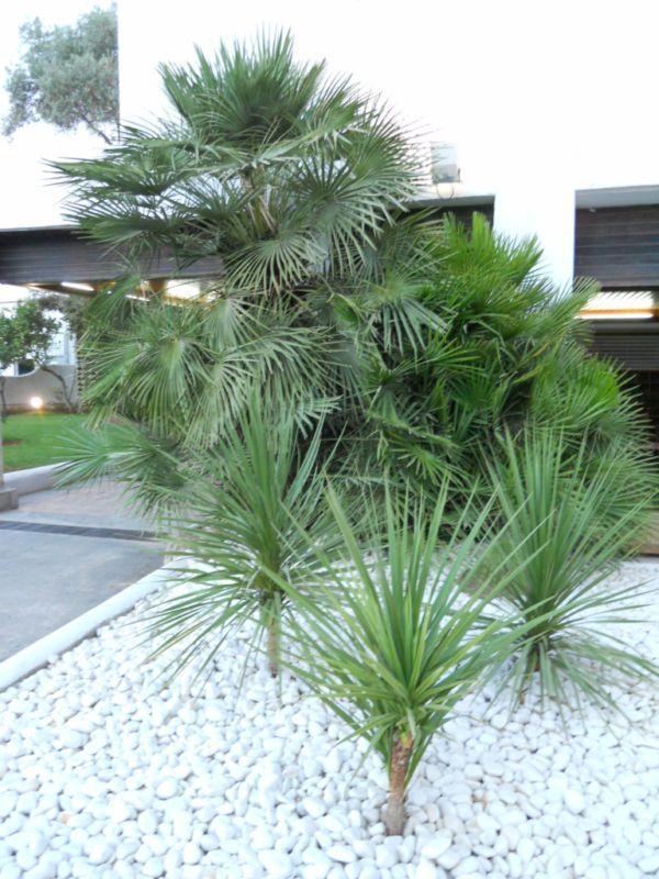 Jardin estilo moderno jardines pinterest tropical for Jardines modernos