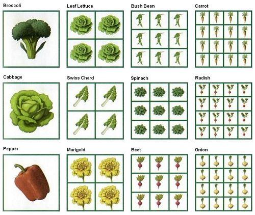 Square Foot Gardening Spacing