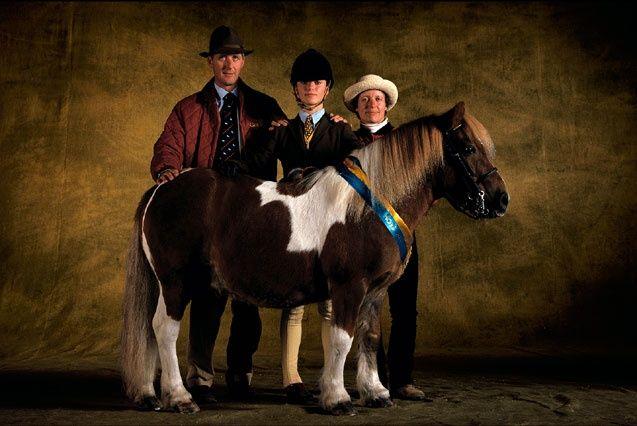 Chunky Pony Horses Horse Breeds Western Horse