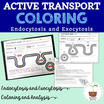 Cell Transport Active Transport Coloring Endocytosis and