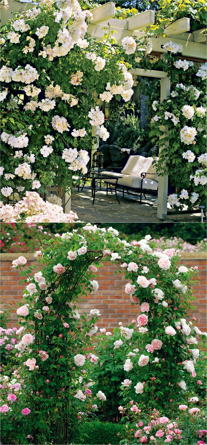 Year round plants for flower beds - 20 Favorite Flowering Vines For The Fence And Arbor Page 3 Of 3 Texas Flower Bedstexas Gardeninggarden
