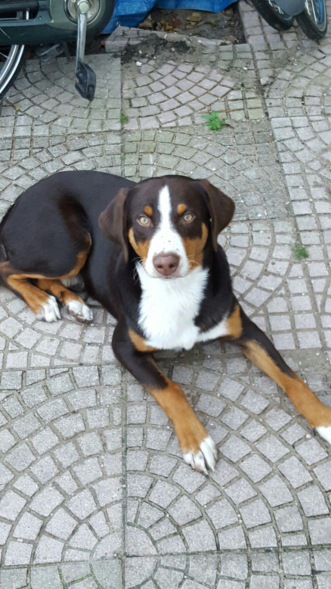 Onze Helay Dogs Animals Cute