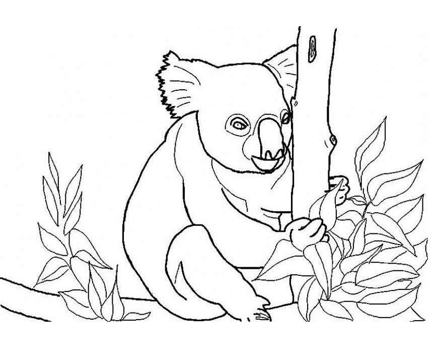 Free Printable Koala Coloring Pages For Kids Coloring