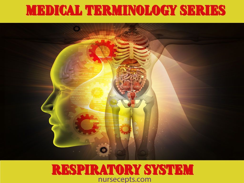 Medical Terminology Of The Respiratory System Nursecepts In 2020 Medical Terminology Cardiovascular System Musculoskeletal System