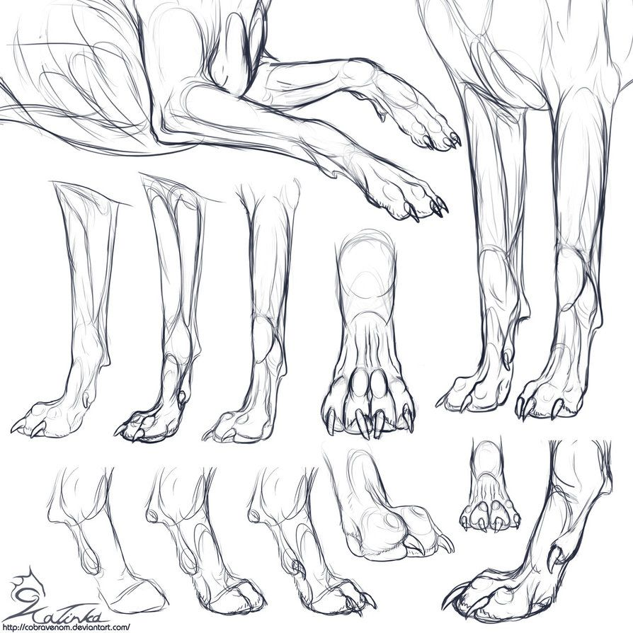 Study: Canine forepaws by CobraVenom on DeviantArt | Canes / Canines ...