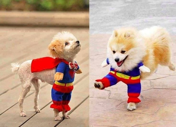 Pets play a big role in our lives particularly dogs. Many of the people treat their pooch like their own child even makes them as their best friend. & Dog Costumes For This Christmas Festive | Pinterest | Pet care Dog ...