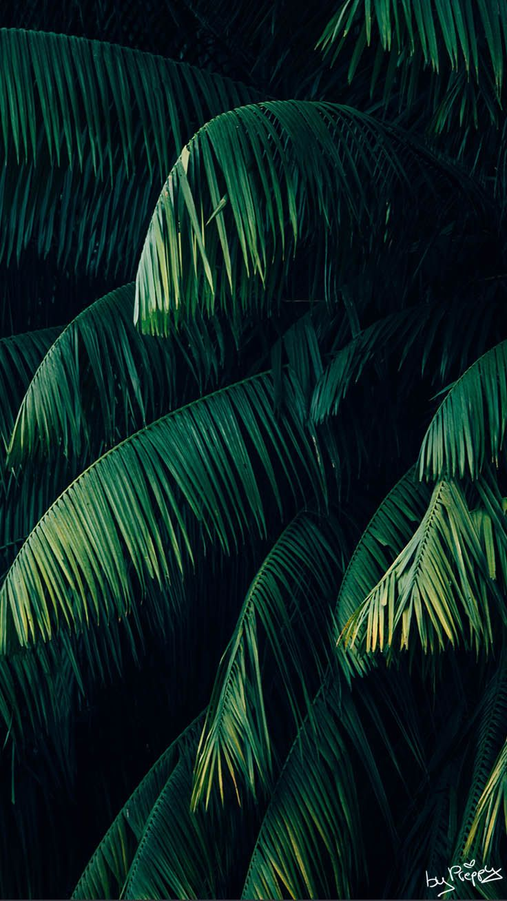 10 Tropical Jungle iPhone X Wallpapers Green pictures