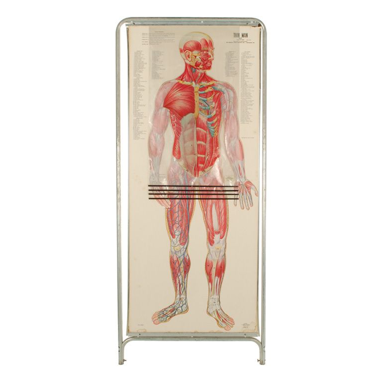 Vintage Human Anatomy Chart with Overlays, Double Sided | Human ...