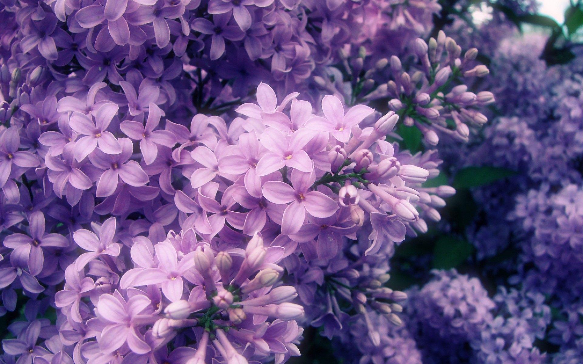 purple flowers wallpaper #145795, flowers Photography ...