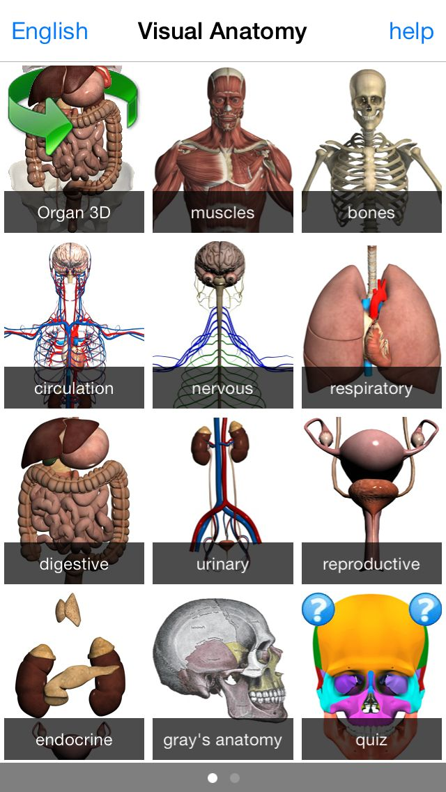 Great application for anatomy! | Anatomy | Anatomy, App, Best mobile