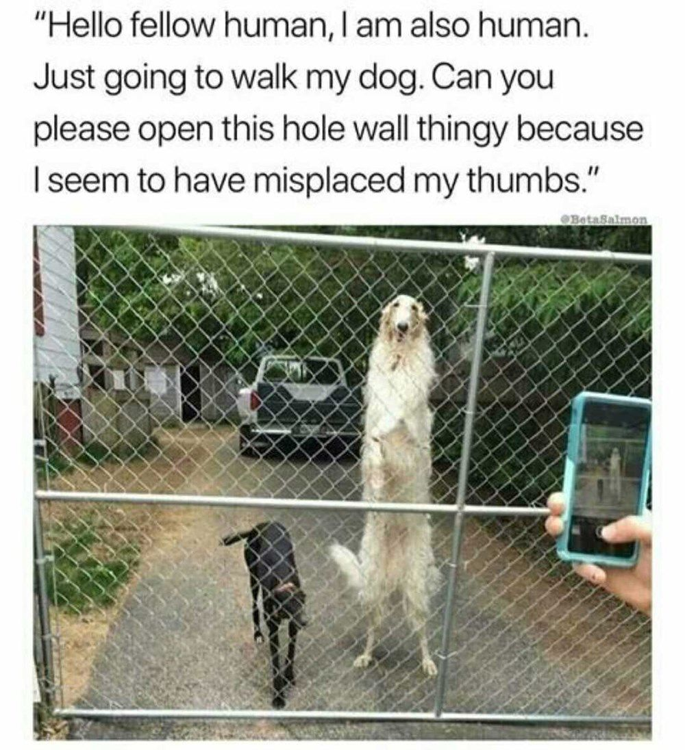 20 Silly Animal Memes That Ll Brighten Your Day Silly Animals Funny Animal Memes Funny Dog Memes
