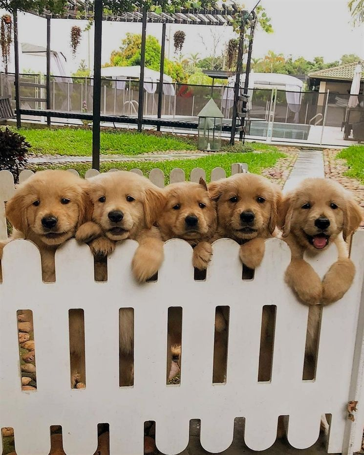 Picture Perfect Baby Animals Cute Baby Animals Cute Animals